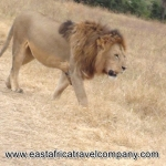 EAST AFRICA TRAVEL COMPANY 3